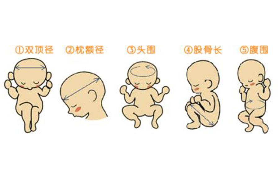 37周胎儿发育指标 第2张-备孕-孕期检查-孕产妇食谱-胎教育儿